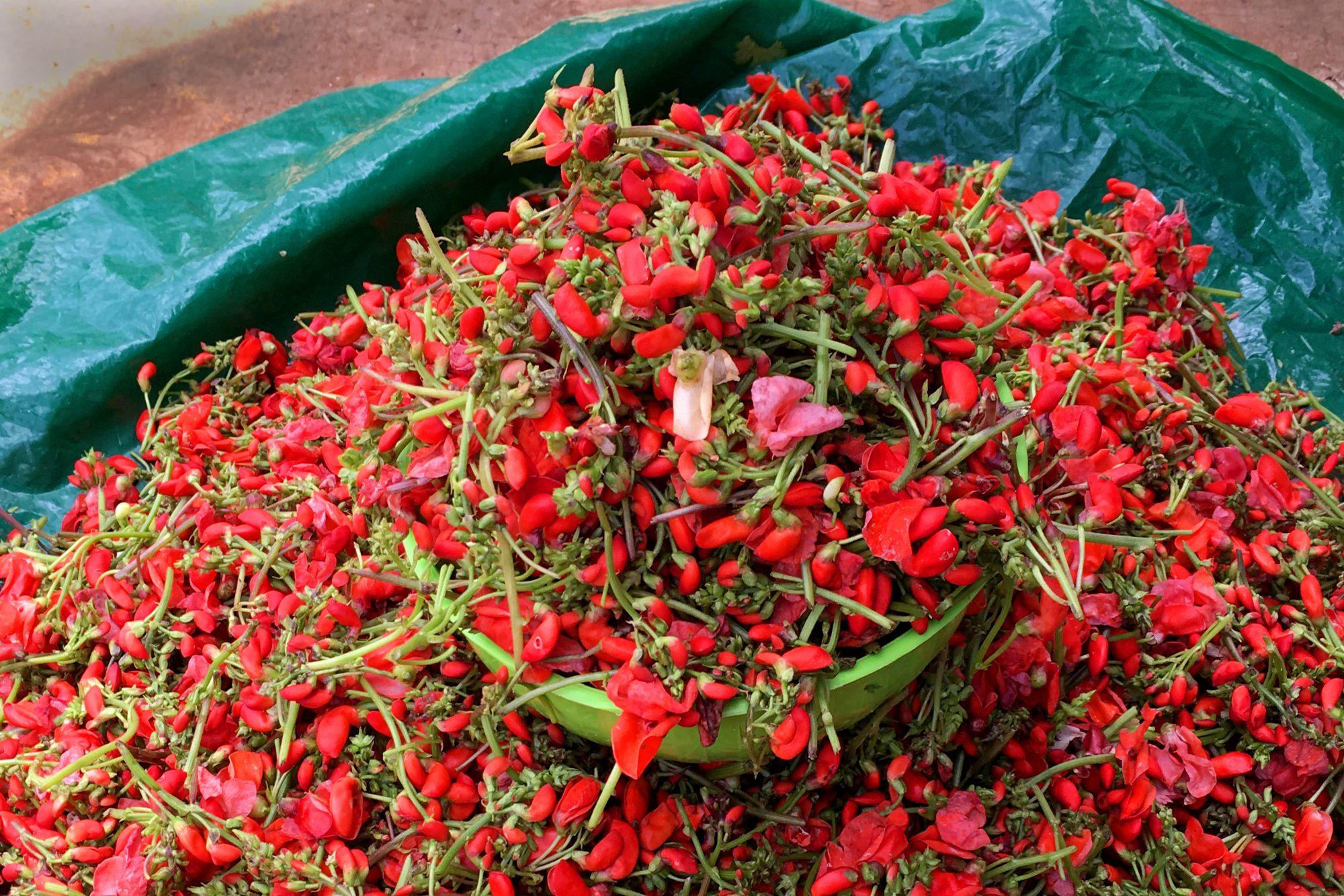 Flor de bótil for sale at market in San Cristóbal de las Casas, Chiapas.